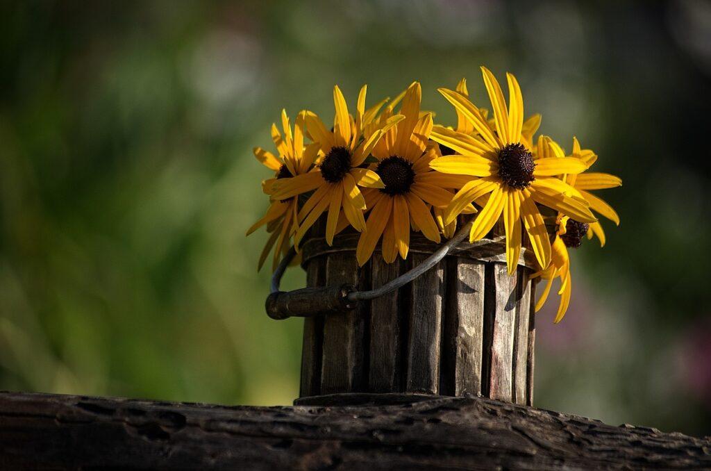 flower, pot, pots
